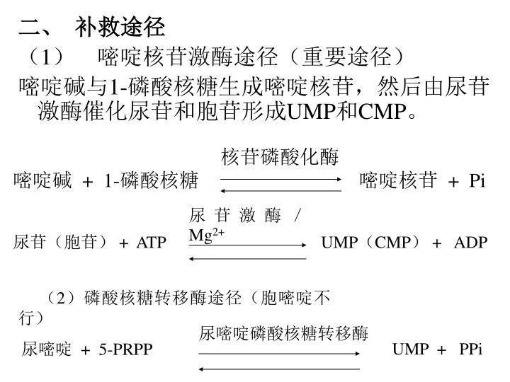 尿嘧啶磷酸核糖转移酶