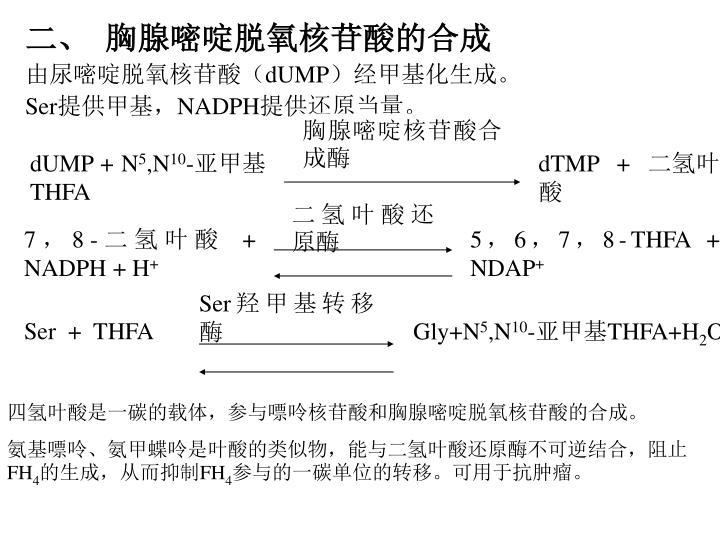 胸腺嘧啶核苷酸合成酶