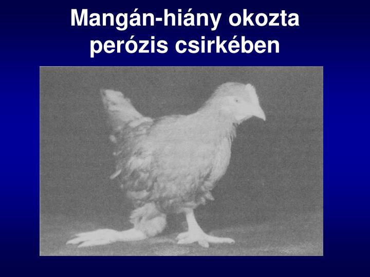 Mangán-hiány okozta perózis csirkében