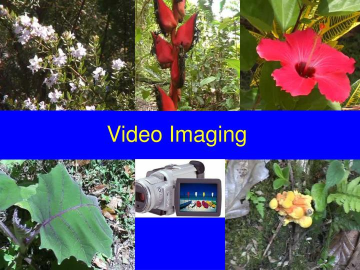 Video Imaging
