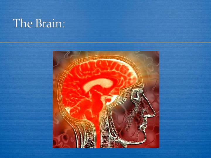 The Brain: