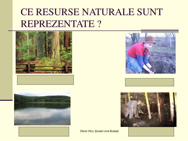 CE RESURSE NATURALE SUNT REPREZENTATE ?