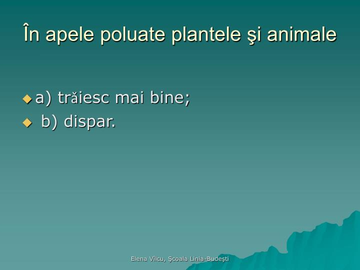 În apele poluate plantele şi animale