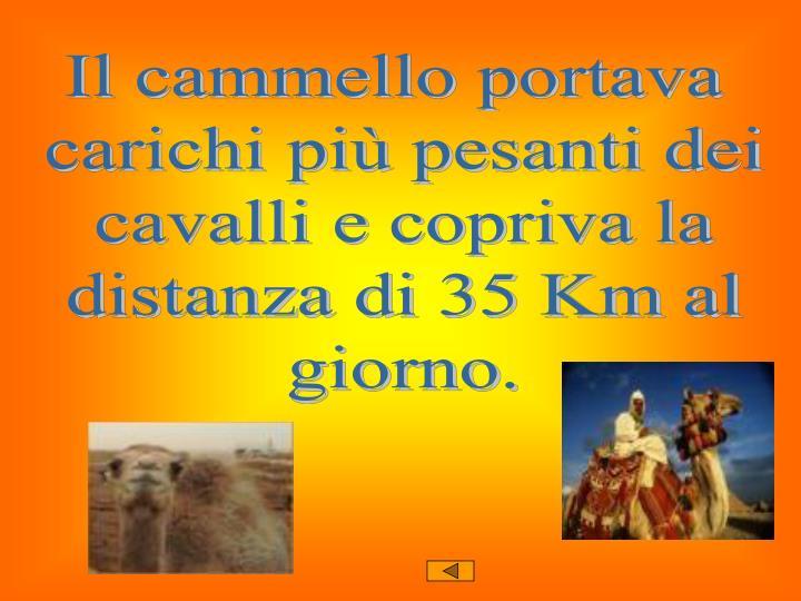 Il cammello portava