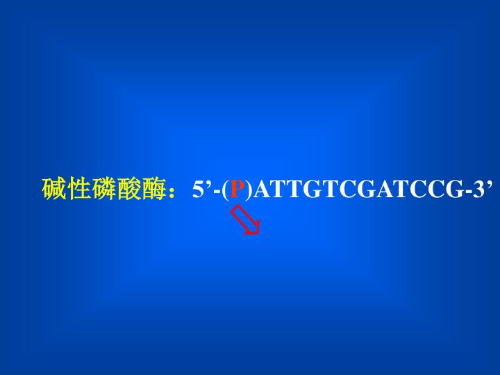 碱性磷酸酶