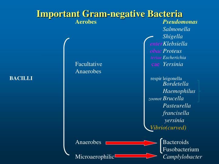 Important Gram-negative Bacteria