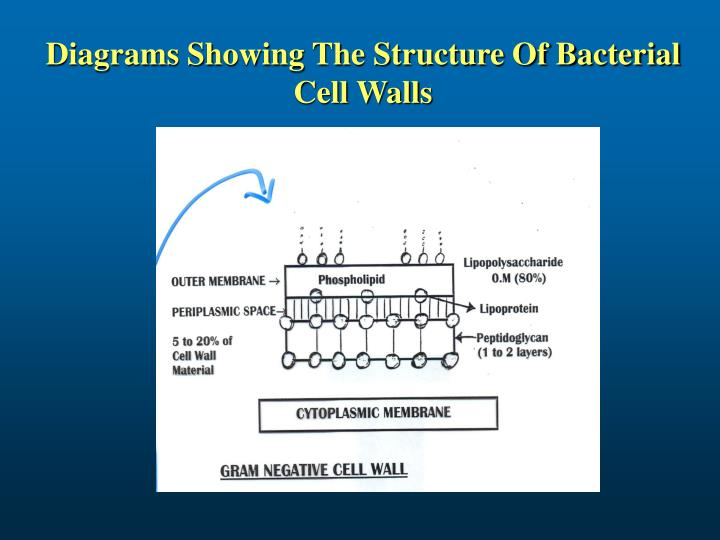Diagrams Showing The Structure Of Bacterial Cell Walls