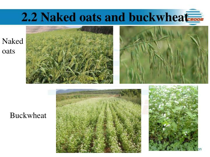 2.2 Naked oats and buckwheat