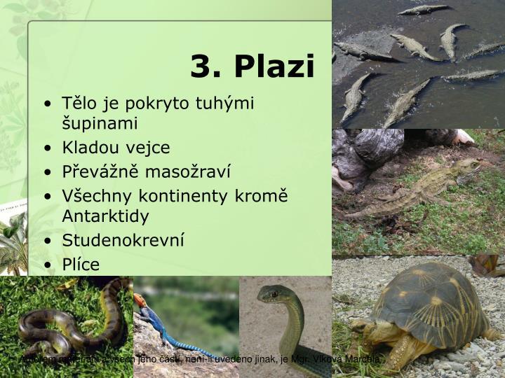 3. Plazi