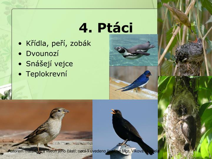4. Ptáci