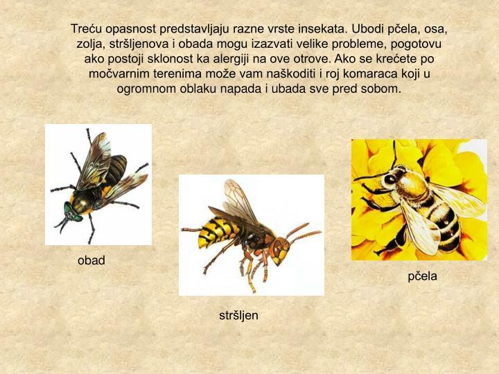Treću opasnost predstavljaju razne vrste insekata. Ubodi pčela, osa, zolja, stršljenova i obada mogu izazvati velike probleme, pogotovu ako postoji sklonost ka alergiji na ove otrove. Ako se krećete po močvarnim terenima može vam naškoditi i roj komaraca koji u ogromnom oblaku napada i ubada sve pred sobom.
