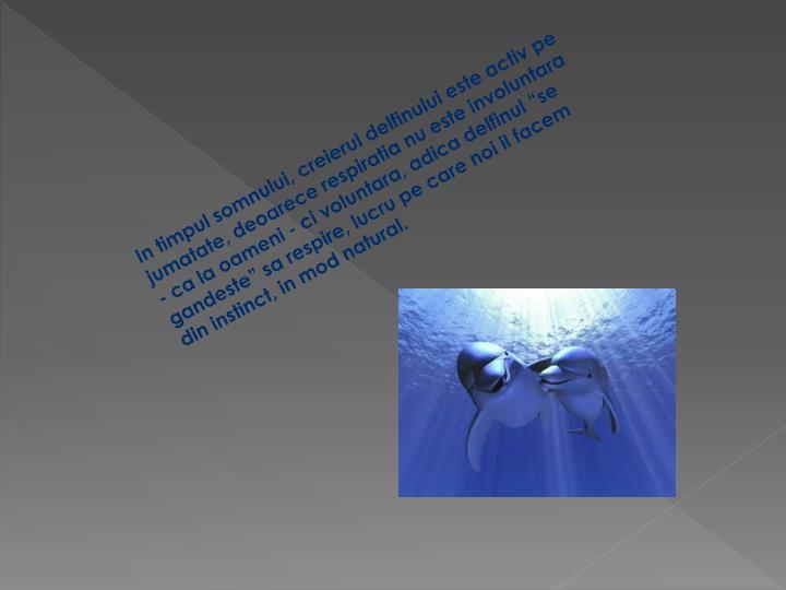 In timpul somnului, creierul delfinului este activ pe