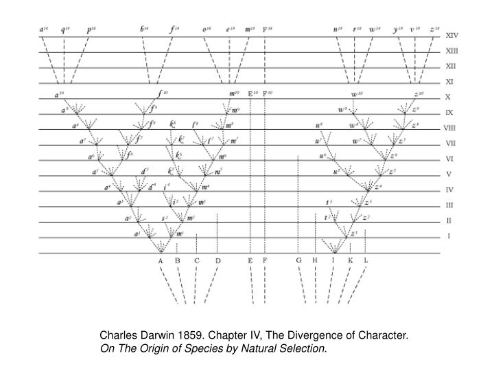 Charles Darwin 1859. Chapter IV, The Divergence of Character.