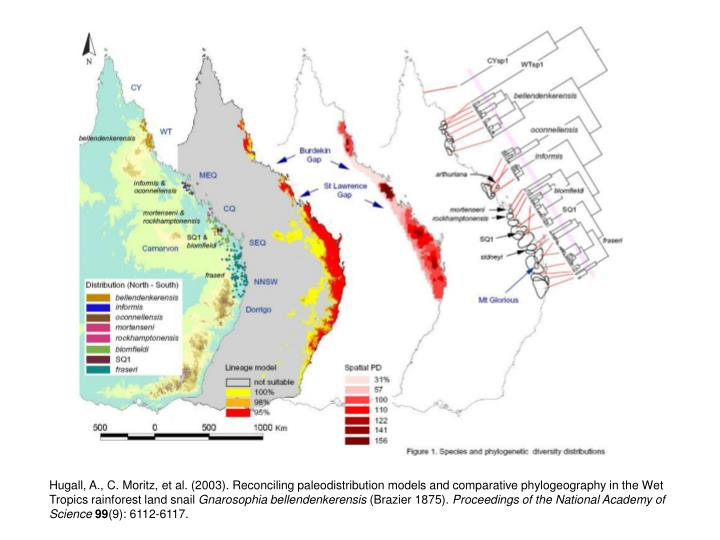 Hugall, A., C. Moritz, et al. (2003). Reconciling paleodistribution models and comparative phylogeography in the Wet Tropics rainforest land snail