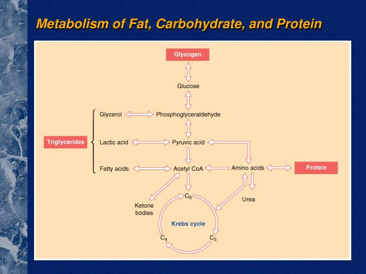 Metabolism of Fat, Carbohydrate, and Protein