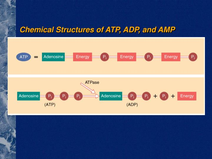 Chemical Structures of ATP, ADP, and AMP