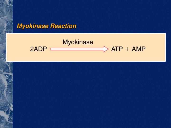 Myokinase Reaction