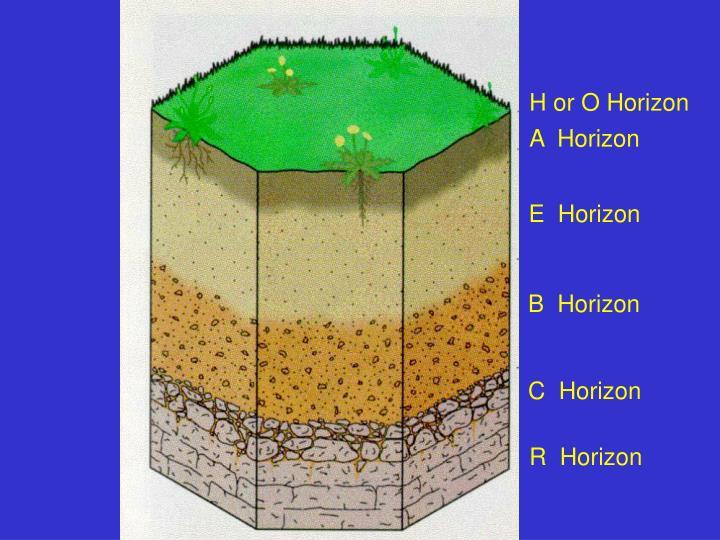 H or O Horizon