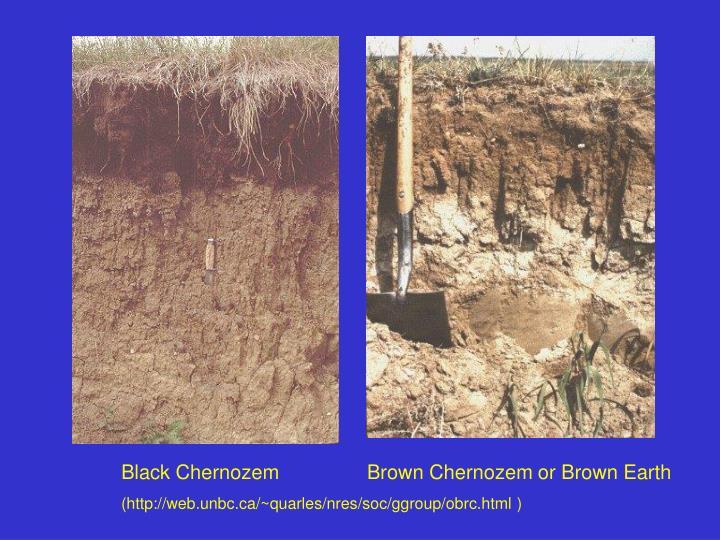 Black Chernozem                Brown Chernozem or Brown Earth