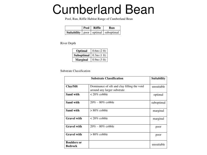 Cumberland Bean