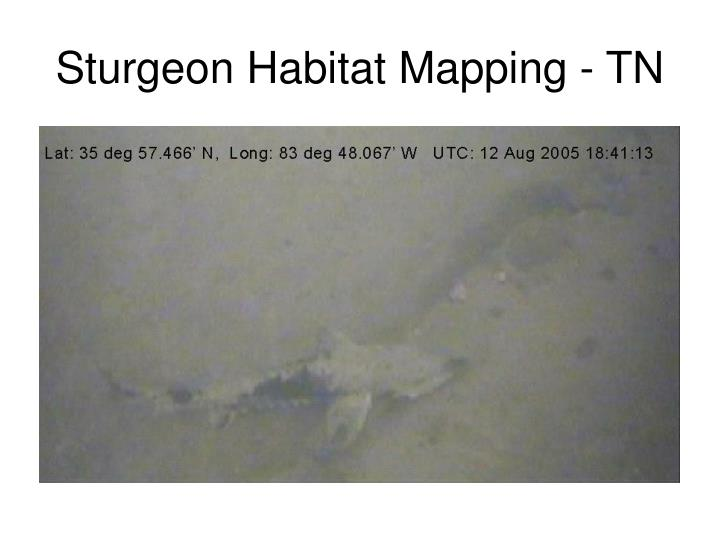 Sturgeon Habitat Mapping - TN