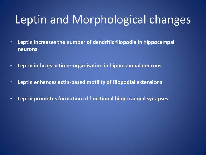 Leptin and Morphological changes