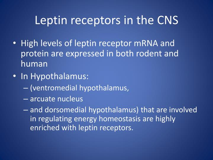 Leptin receptors in the CNS