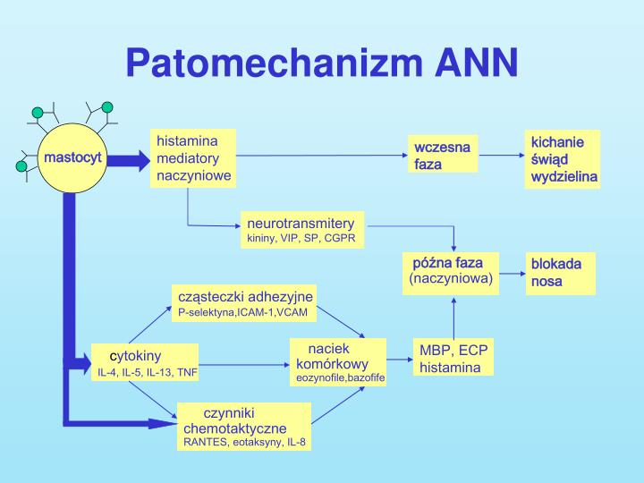Patomechanizm ANN