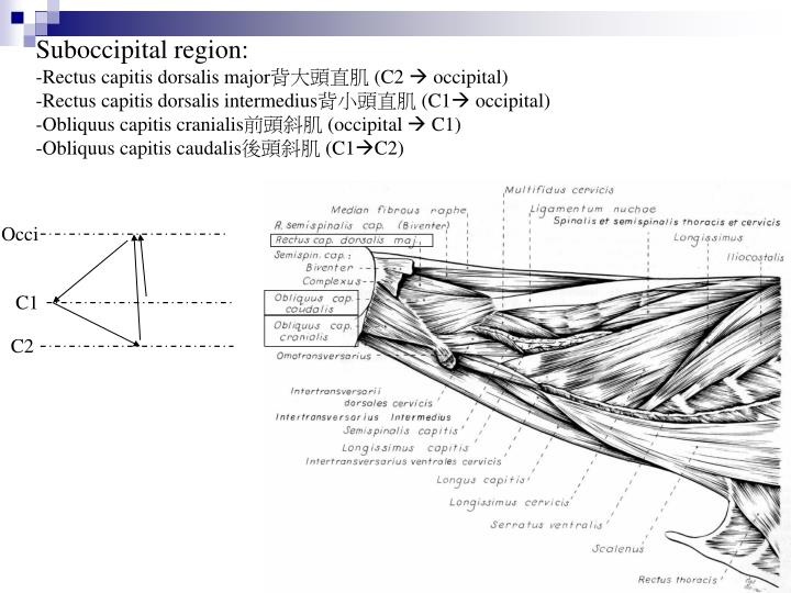 Suboccipital region: