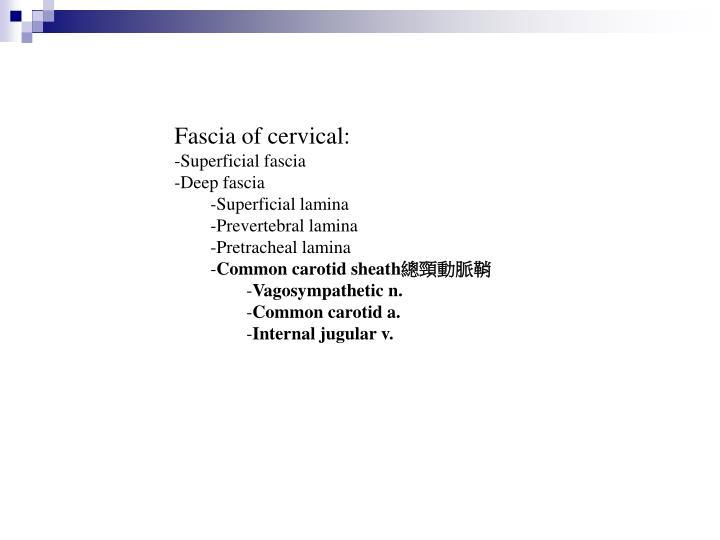 Fascia of cervical: