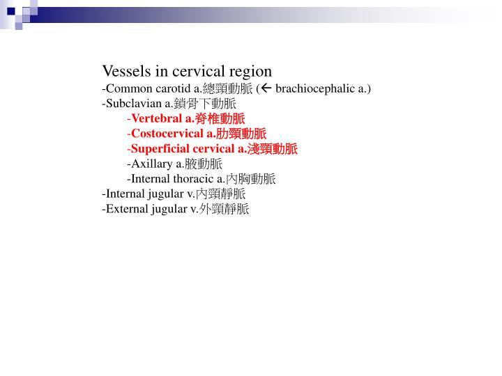 Vessels in cervical region