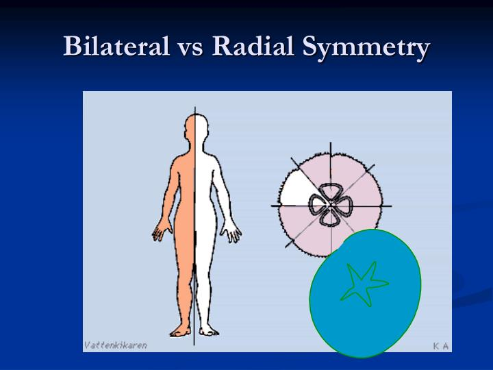 Bilateral vs Radial Symmetry