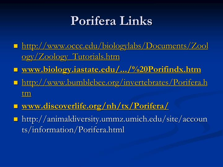 Porifera Links