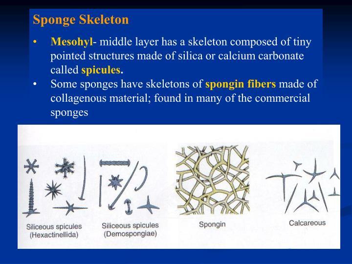 Sponge Skeleton