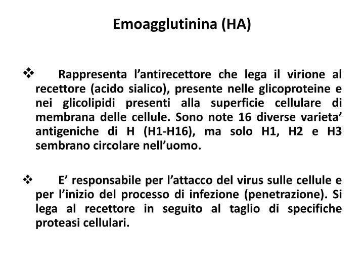 Emoagglutinina (HA)