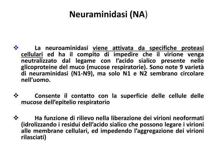 Neuraminidasi (NA