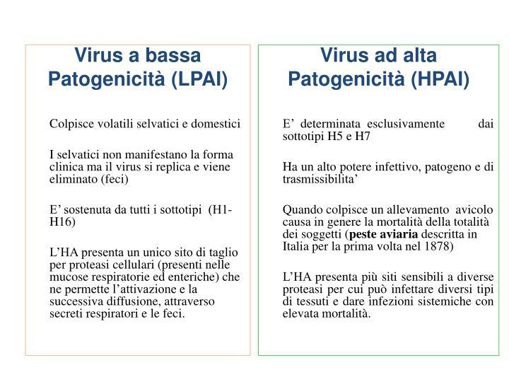 Virus a bassa