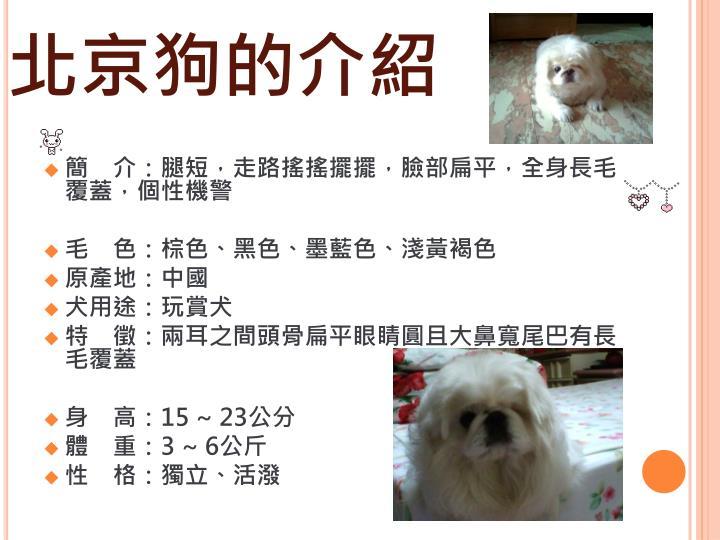 北京狗的介紹