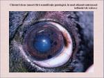 chisturi iriene uneori f r semnifica ie patologic n mod obi nuit antreneaz tulbur ri de vedere