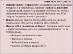 patologia pleoapelor1