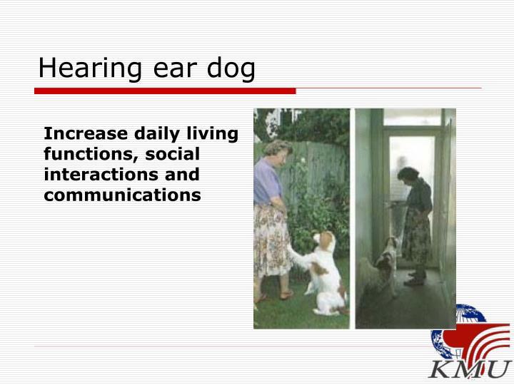 Hearing ear dog