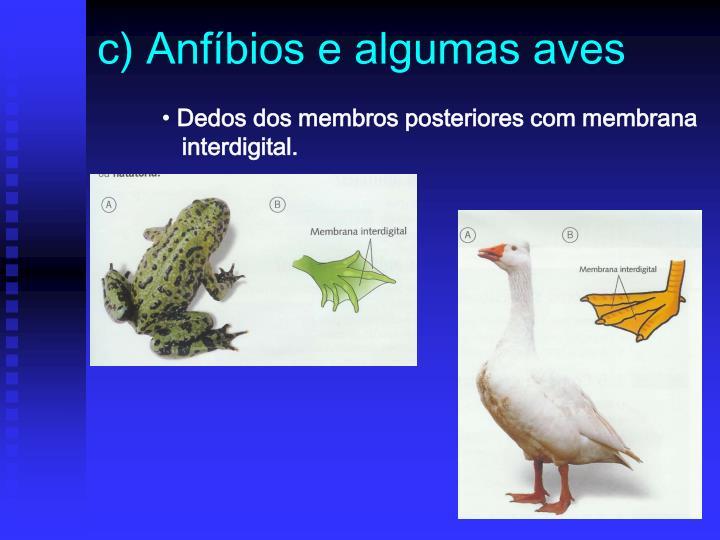 c) Anfíbios e algumas aves