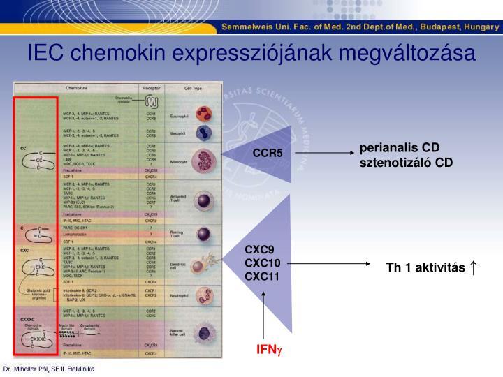 IEC chemokin expressziójának megváltozása