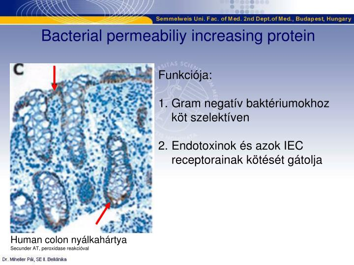 Bacterial permeabiliy increasing protein