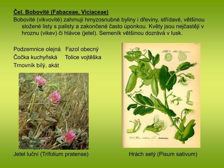 Čel. Bobovité (Fabaceae, Viciaceae)