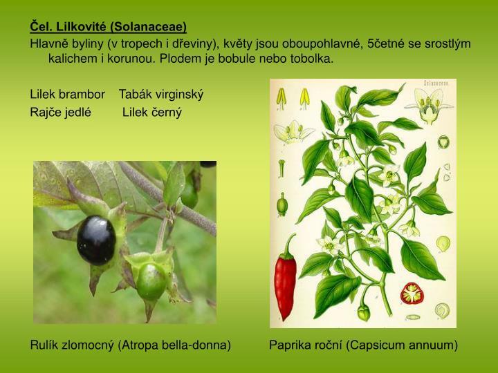 Čel. Lilkovité (Solanaceae)