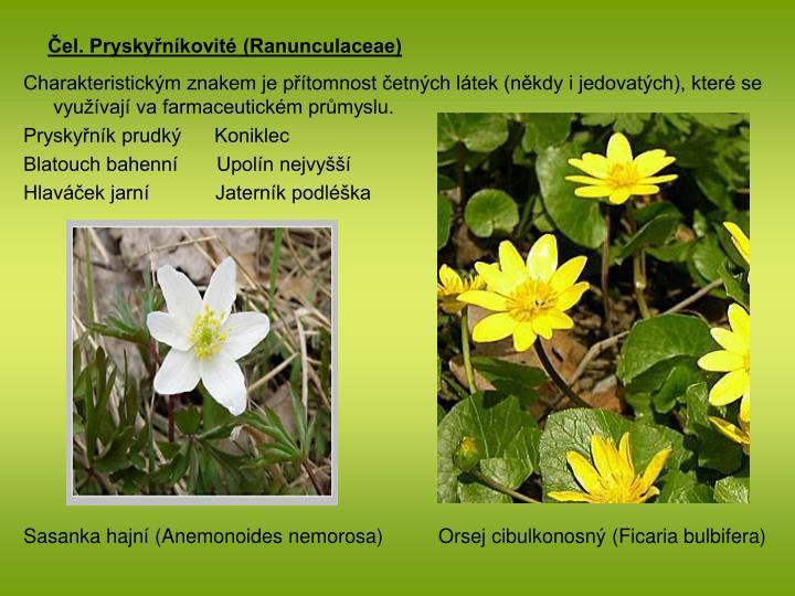 Čel. Pryskyřníkovité (Ranunculaceae)