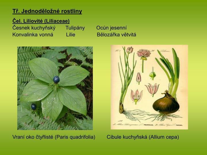 Tř. Jednoděložné rostliny