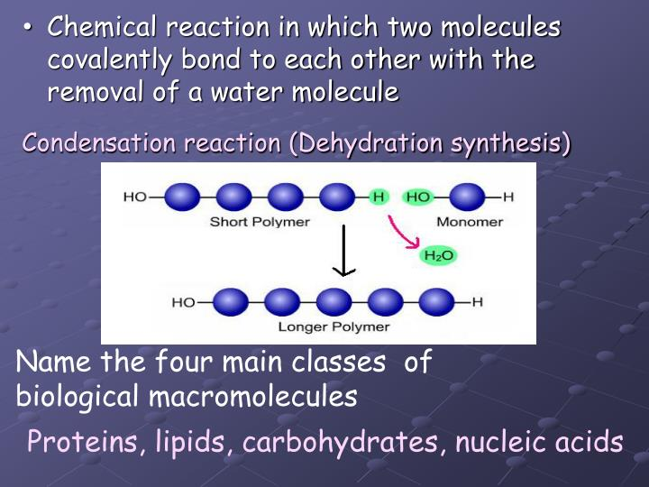 Chemical reaction in which two molecules covalently bond to each other with the removal of a water molecule