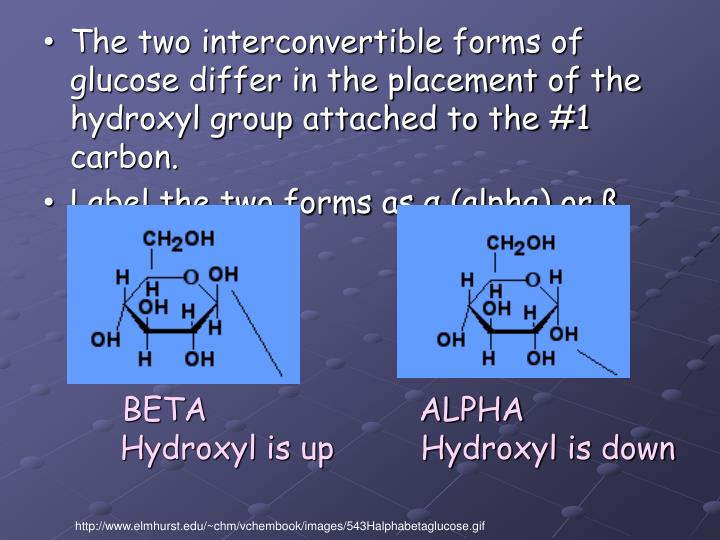 The two interconvertible forms of glucose differ in the placement of the hydroxyl group attached to the #1 carbon.